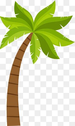 Essay about the coconut tree care
